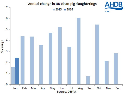 Annual change in UK clean pig slaughterings