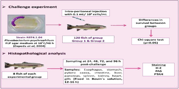 The usefulness of feeding the fish with diet supplemented with phytobiotics