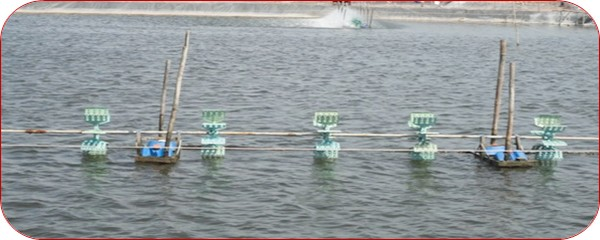 Management of intensive vannamei shrimp ponds the fish site for Koi pond water quality levels