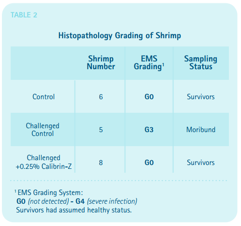 Histopathology Grading of Shrimp