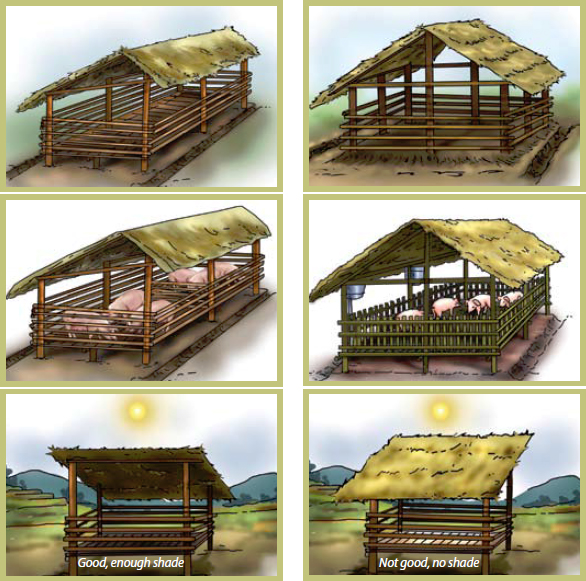 How to farm pigs housing the pig site for Different types of house plans