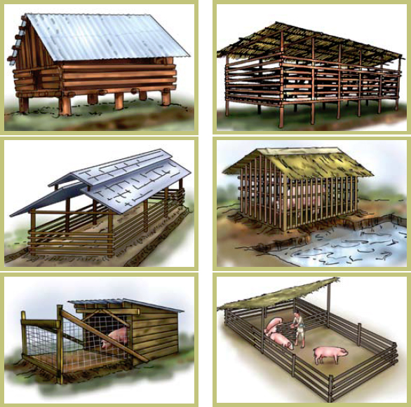 How to farm pigs housing the pig site for Different types of house designs