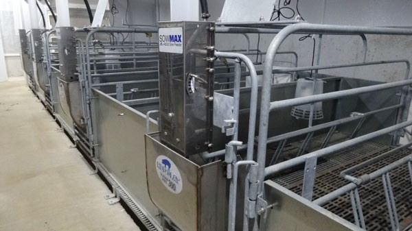 Large pen farrowing crates with SowMAX feeders
