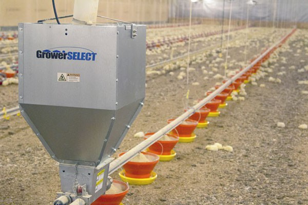Dedicated chick line with Hi-Grow feeders
