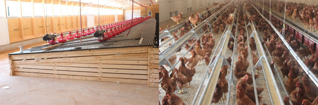 Missouri Cage Free Egg Production The Poultry Site