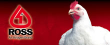 Aviagen - Ross Breeders - Poultry Breeders