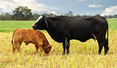 TheCattleSite Beef Sustainability - Ethics