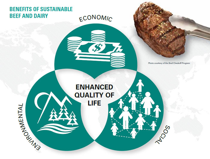 Benefits of sustainability beef and dairy