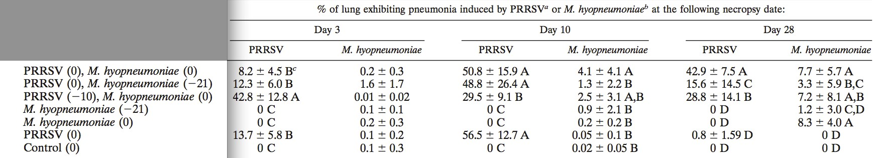 Macroscopic pneumonia lesions