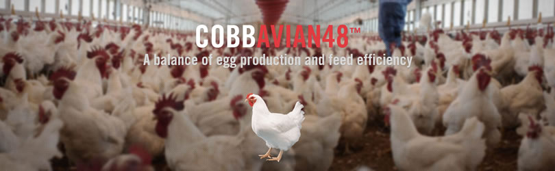 Cobb-Vantress, Inc. - CobbAvian48™
