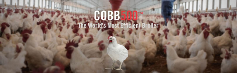 Cobb-Vantress, Inc. - Cobb500