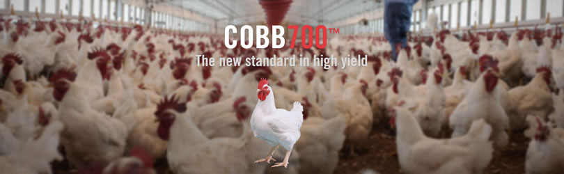 Cobb-Vantress, Inc. - Cobb700