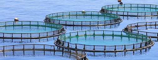 AQUACULTURE DISINFECTION - Halamid