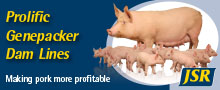 JSR Genetics - Making pork more profitable - Prolific Genepacker Dam Lines