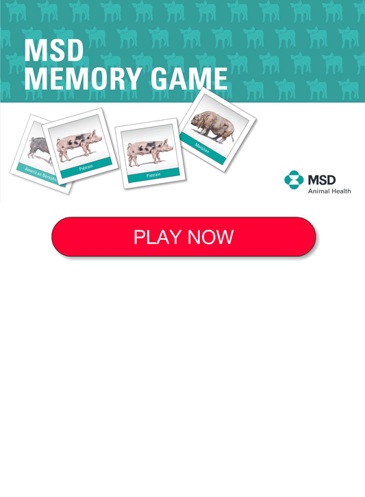 MSD Animal Memory Game - Think Ahead