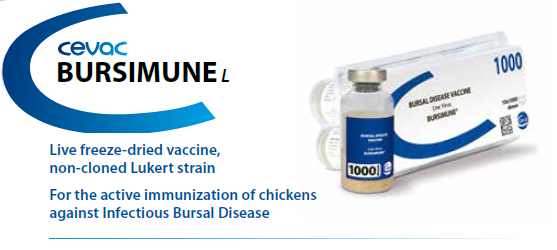 BURSIMUNE® - For the active immunization of Chickens against Infectious Bursal Disease from CEVA SANTE ANIMALE