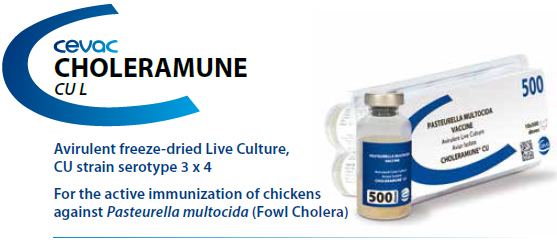 CHOLERAMUNE® CU - For the active immunization of chickens against Pasteurella multocida from CEVA SANTE ANIMALE