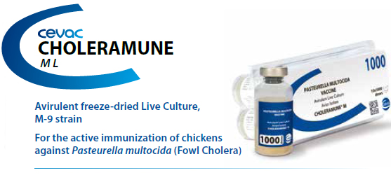 CHOLERAMUNE® M - For the active immunization of chickens against Pasteurella multocida from CEVA SANTE ANIMALE