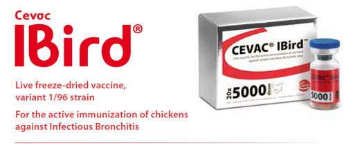 CEVAC® IBird: Live freeze-dried vaccine,