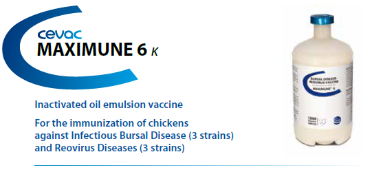 CEVA - MAXIMUNE® 6 For the immunisation of chickens against Infectious Bursal Disease and Reovirus Diseases from CEVA SANTE ANIMALE