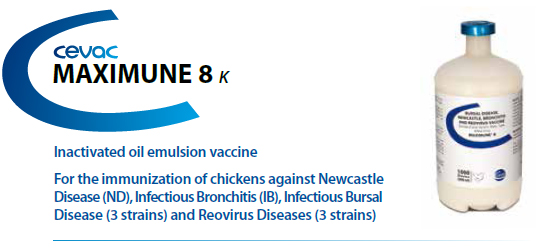 CEVA - MAXIMUNE® 8 For the immunisation of chickens against Newcastle Disease, Infectious Bronchitis, Infectious Bursal Disease and Reovirus Diseases from CEVA SANTE ANIMALE