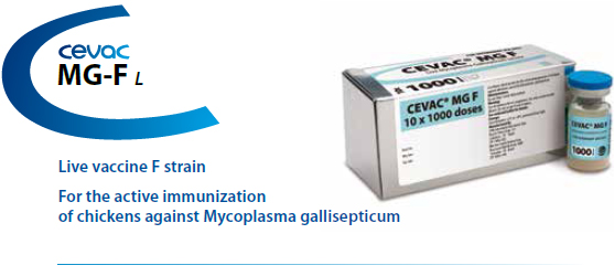 CEVAC® MG F - For active immunization of chickens against Mycoplasma gallisepticum from CEVA SANTE ANIMALE