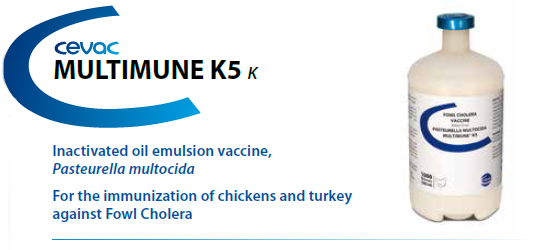CEVA - MULTIMUNE K5™ for the immunisation of chickens and turkey against Fowl Cholera from CEVA SANTE ANIMALE