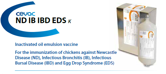 CEVA - CEVAC® ND IB IBD EDS K For the immunisation of chickens against Newcastle Disease, Infectious Bronchitis and Egg Drop Syndrome from CEVA SANTE ANIMALE