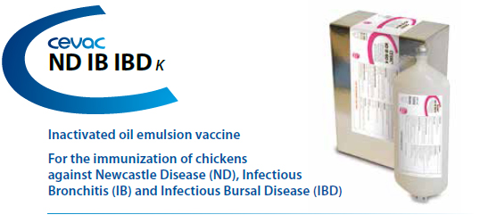 CEVA - CEVAC® ND IB IBD K For the immunisation of chickens against Newcastle Disease, Infectious Bronchitis and Infectious Bursal Disease from CEVA SANTE ANIMALE