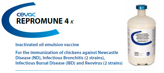 CEVA - REPROMUNE 4™ For the immunisation of chickens against Newcastle Disease, Infectious Bronchitis, Infectious Bursal Disease and Reovirus from CEVA SANTE ANIMALE