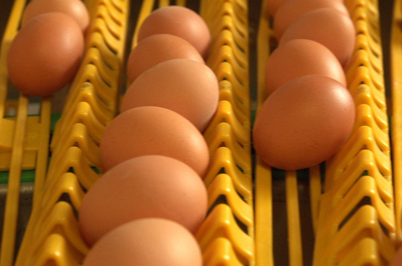 Jansen Poultry Equipment - Egg Handling