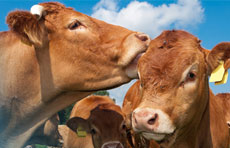 Evolution of BVD programs and their diagnostic methods