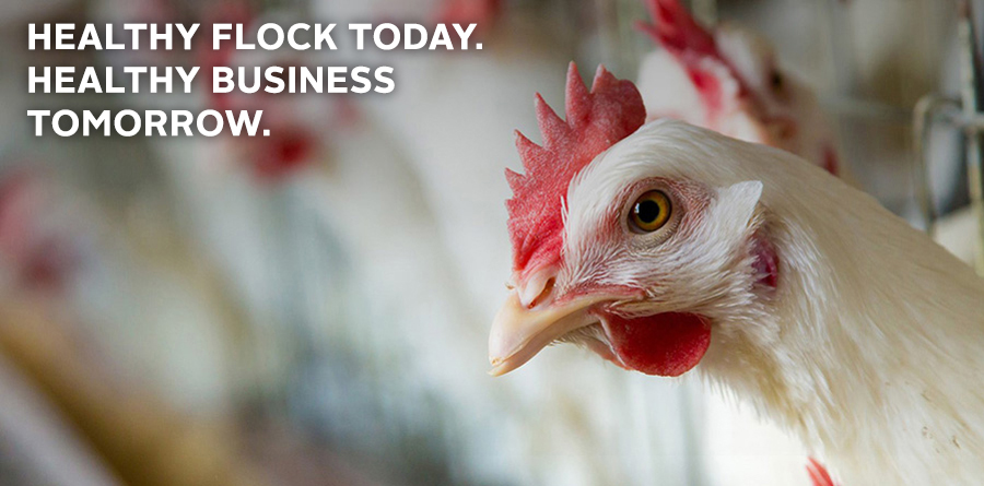 Merial - Healthy Flock Today Healthy Business Tomorrow