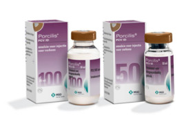 Porcilis® PCV ID - The Wait is Over