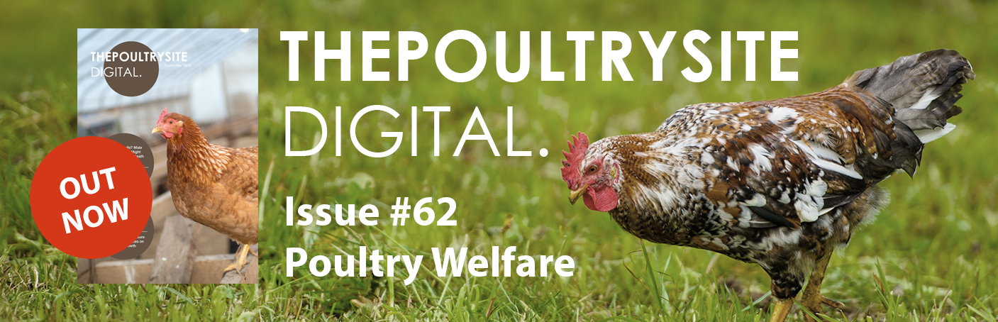ThePoultrySite Digital #62 - Poultry Welfare