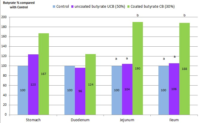 Amount of butyrate in % compared to the unsupplemented control group