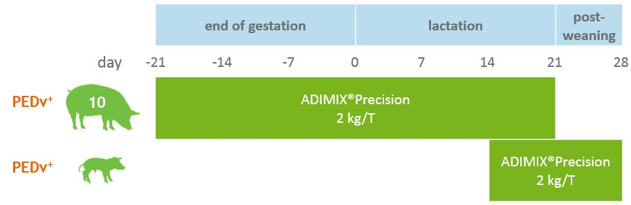 Figure 2: Supplementation scheme in the ADIMIX®-supplemented test group
