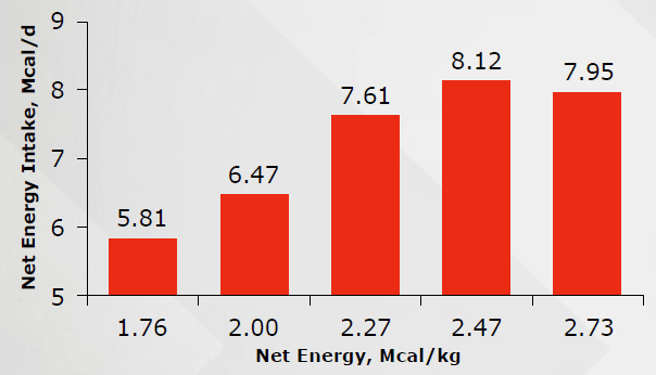 FIGURE B3. EFFECTS OF NET ENERGY INTAKE PER DAY BASED ON DIFFERENT NET ENERGY PER KG OF DIET (ADAPTED FROM STEIN AND EASTER, 1996)