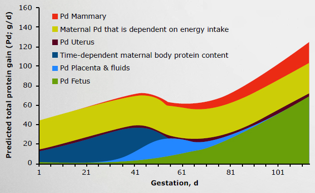 FIGURE I5. PREDICTED TOTAL PROTEIN GAIN FOR DIFFERENT PROTEIN POOLS THROUGHOUT GESTATION (NRC, 2012)