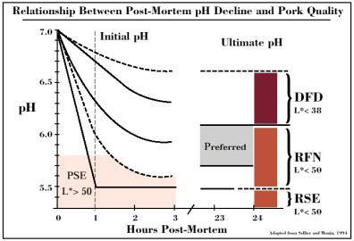 Relationship Between Post-Mortem pH Decline and Pork Quality