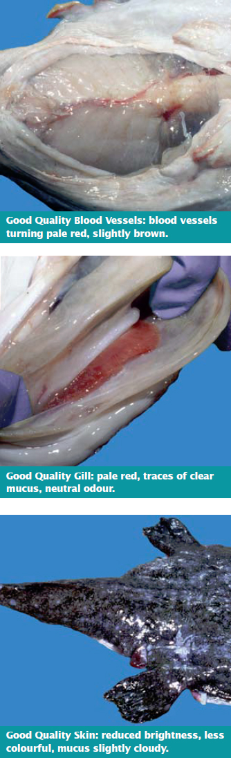 Good Quality Blood Vessels, Gills and Skin