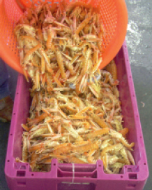 Drain excess dipping solution or seawater from the basket of prawns