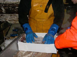 Slushing gives a two day advantage on shelf life over traditionally iced fish