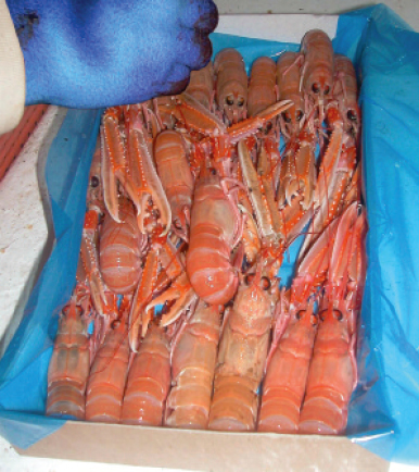 Prawns should be finger-laid into lined or unlined boxes