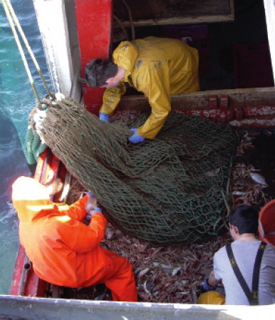 Release prawns from the cod-end as close to the hopper or deck as possible