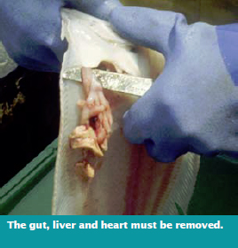 The gut, liver and heart must be removed