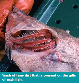 Wash off any dirt that is present on the gills of each fish
