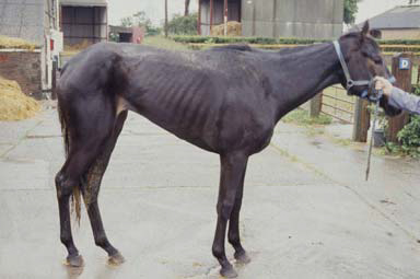 World horse welfare equine grass disease the pet site for Equine motor neuron disease in horses