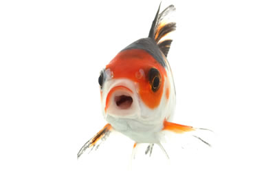 The Fish Tank - ThePetSite