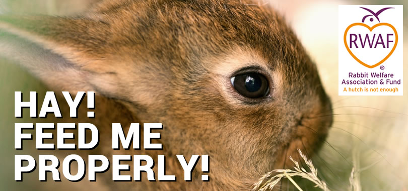 Hay! Feed Me Properly! - Rabbit Welfare